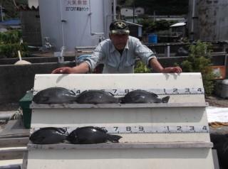 8月1日 大阪 西出氏 グレ 40-45? 5匹 イサギ、中アジ  (センカイ奥) (1024x764)