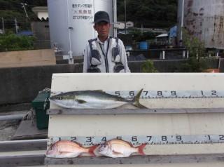 9月8日 奈良 新田氏 メジロ 70? タイ 35? 2匹 (センカイカセ) (1024x764)