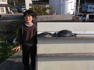 11月17日 大阪 上田くん グレ 40? 2匹 (センカイ奥) (1024x764)