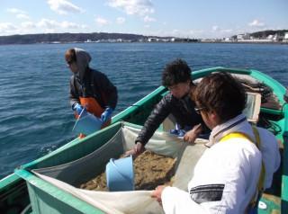 3月10日 串本カセ釣り組合 ヒラメ 4200匹放流 (1) (1024x764)