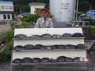 6月30日 奈良 森下氏 グレ 35-50? 25匹 チャリコ 2匹  (センカイ奥)今日もグレが大爆釣でした、小サバ多いので青サと練り餌の、使い分け釣果の違いになります。 (1024x764)