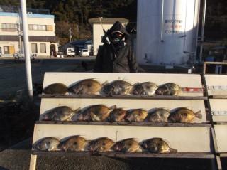 1月12日 大阪 平井氏 ヒラメ 40? マトウダイ 40‐55? 15匹 (センカイ奥)マトウダイ、ヒラメいいかんじで釣れてます。
