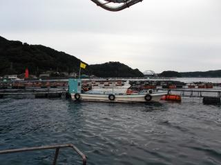 11月1日 船頭 外の浜カセでブリ、メジロ釣れ出しましたエサ、イワシです!!
