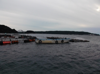 11月1日 船頭 外の浜カセでブリ、メジロ釣れ出しましたエサ、イワシです!! (2)
