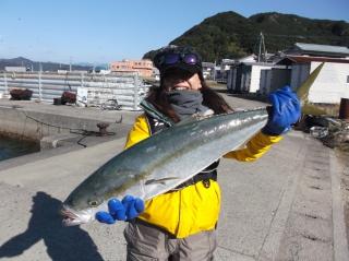 12月5日 大阪 神林さん メジロ 75㎝ (外の浜カセ)