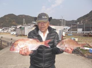 2月28日 大阪 西出氏 タイ 35-50㎝ 3匹 (センカイカセ) (2)