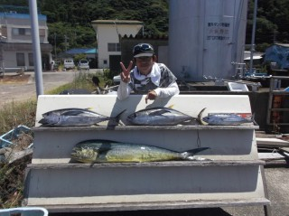 7月30日 大阪 西田氏 キハダマグロ 8キロ 2匹 カツオ、シイラ (岬流し釣り)